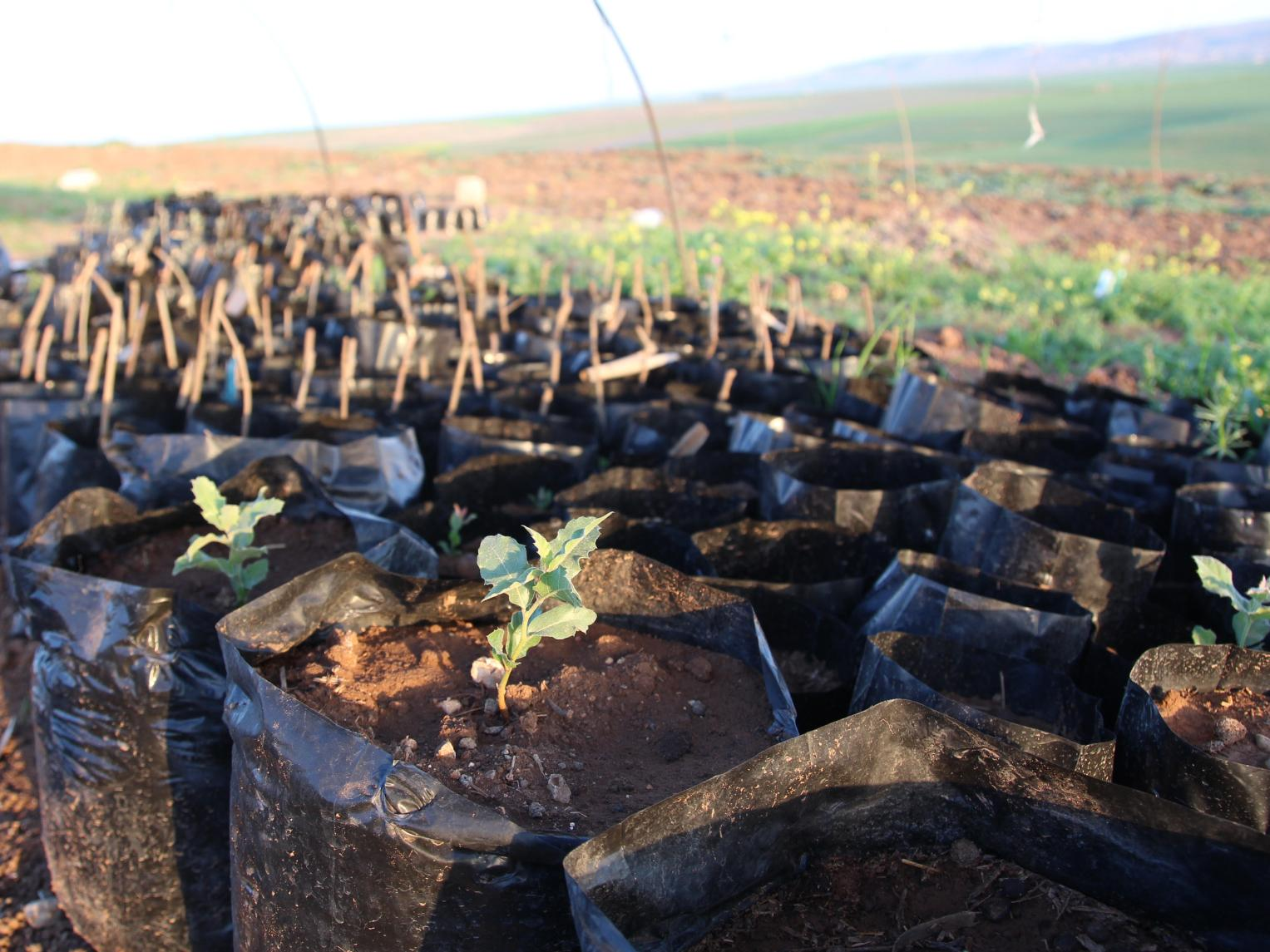 'Here's why we're planting trees in Northern Syria'