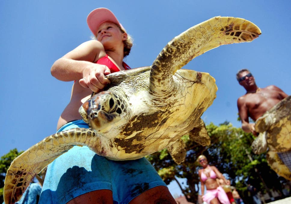 Shelling out: tourists help rescue sea turtles in Bali