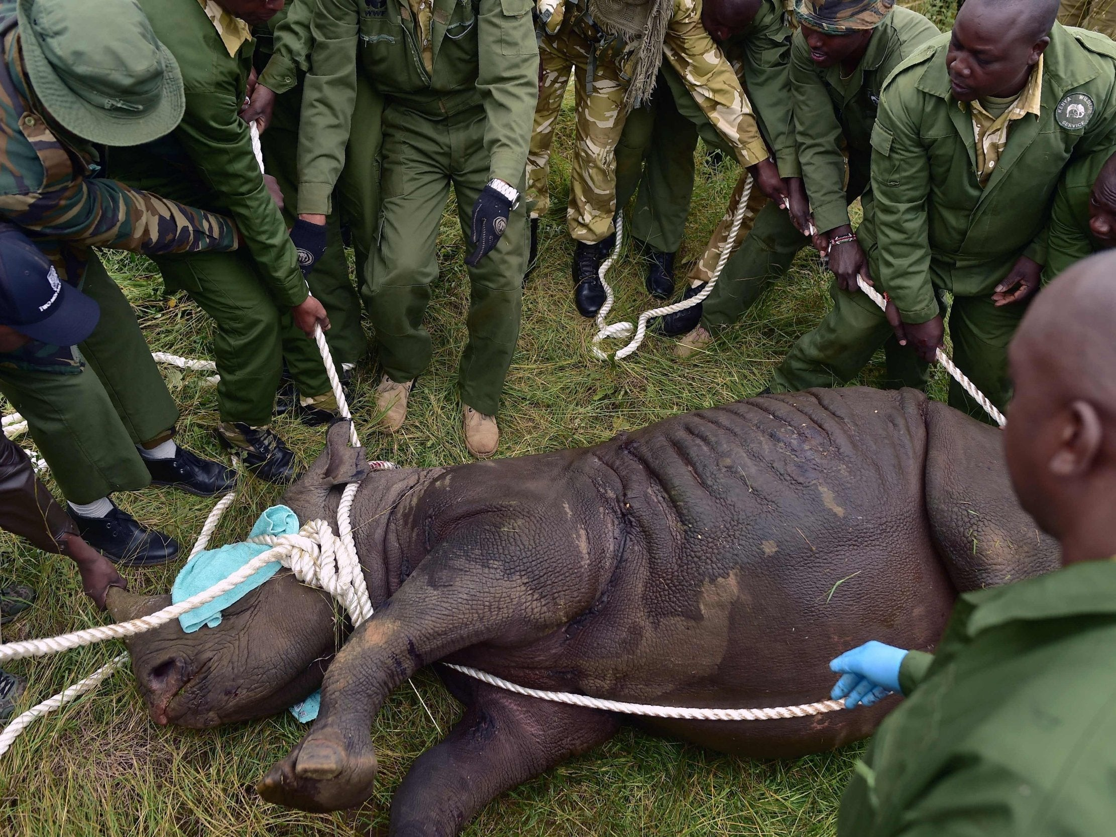 'Complete disaster' as eight out of 11 endangered black rhinos die of salt poisoning