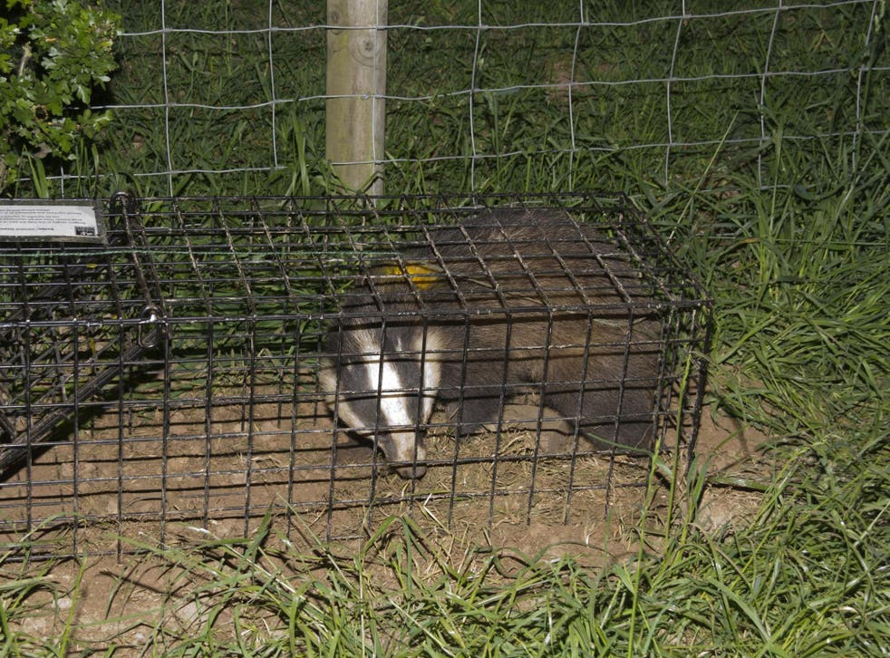 Once in a cage, an animal has no access to water, and the ground is too hard to dig for food
