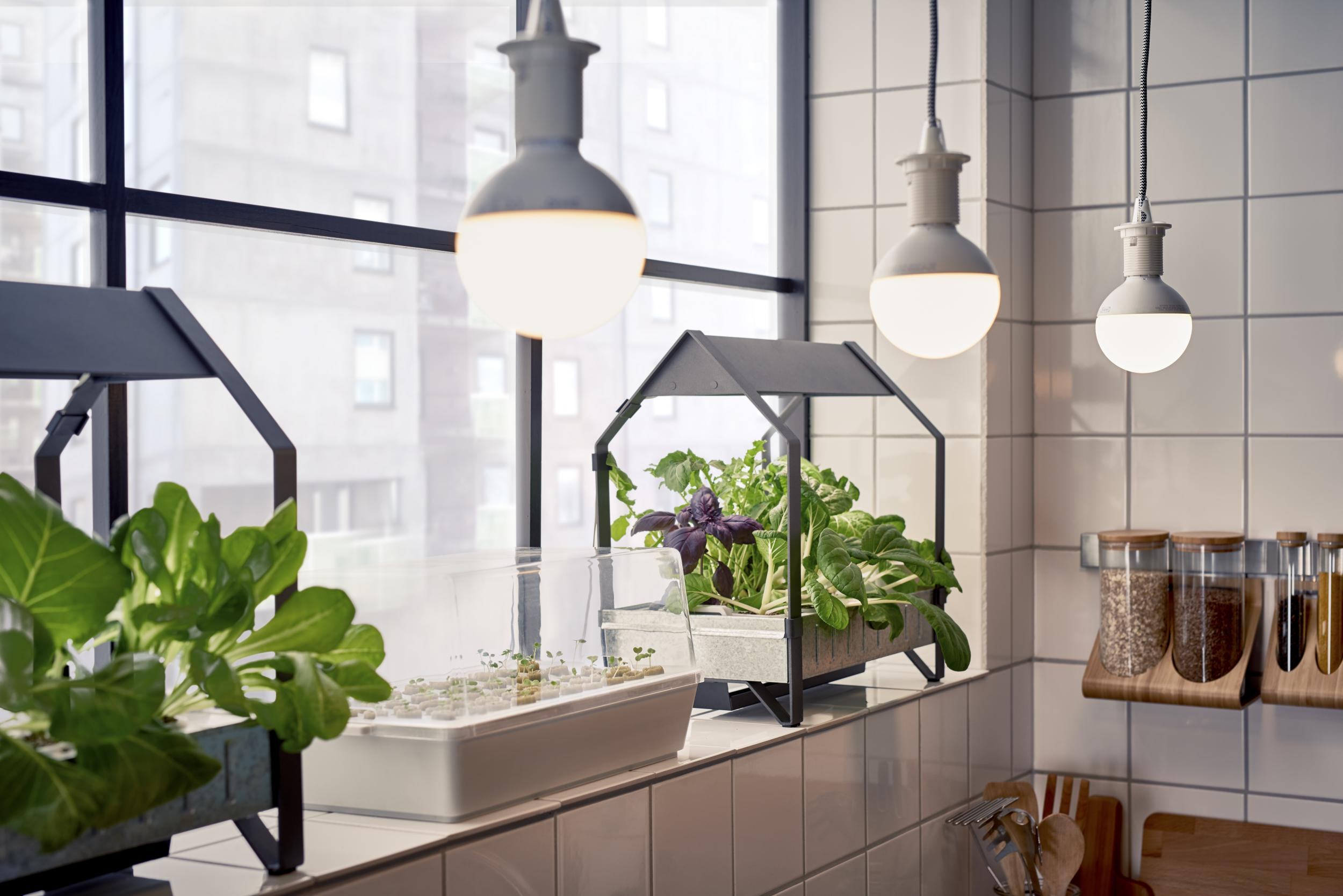growing lamps and tents