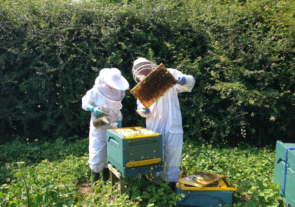 08e48e40b9 National Honey Bee Day 2018  What s being done to save the species in  Britain