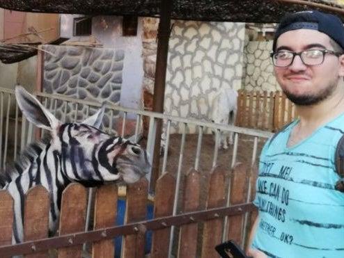 Zoo denies painting black stripes on donkey to look like a zebra