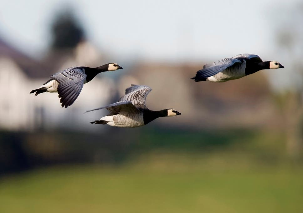 Science in brief: From climate change speeding up bird