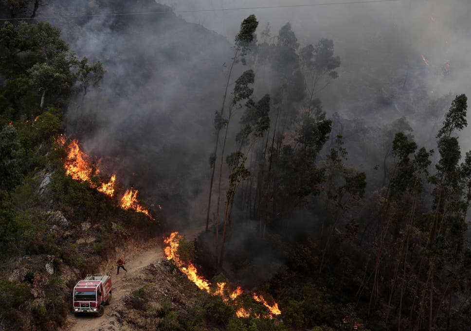 Image result for Portugal wildfire
