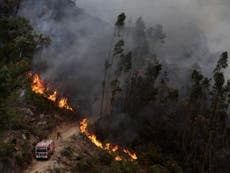 Scores evacuated as blazes rage near Algarve tourist resorts