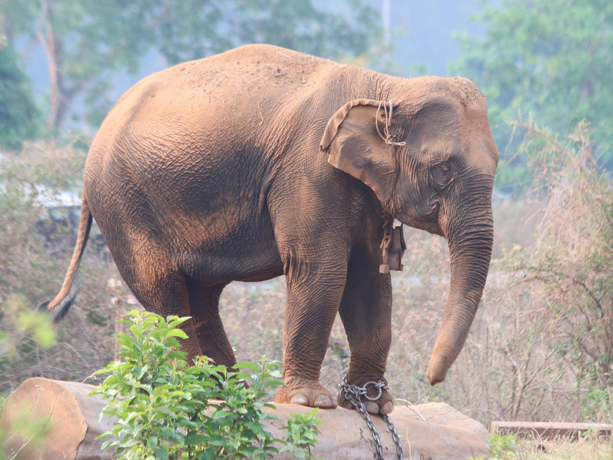 Elephant sex stories