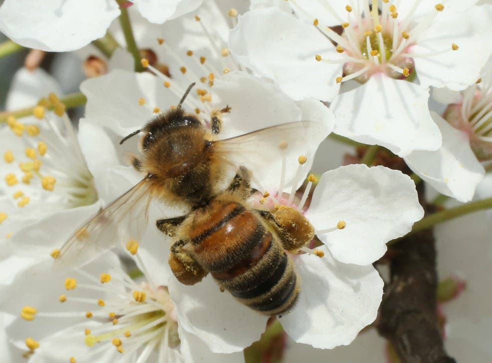 The administration of US President Donald Trump has lifted a ban on bee-killing chemicals and genetically modified crops in wildlife refuges across the country