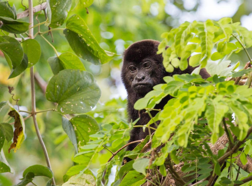 <p>Very few cases of monkeypox have ever been recorded in the UK</p>