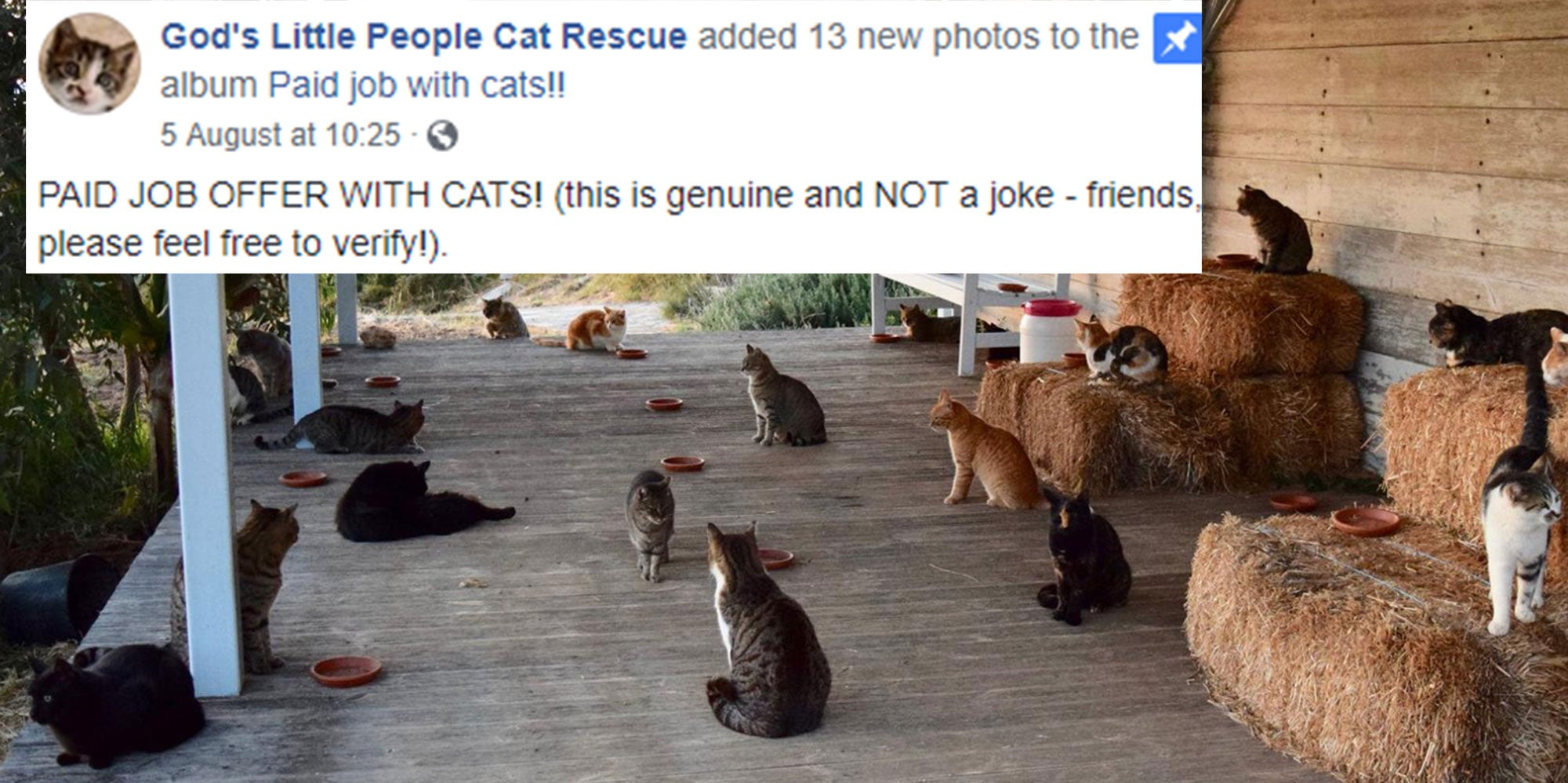 This Job Advert For A Cat Carer On A Greek Island Is Even