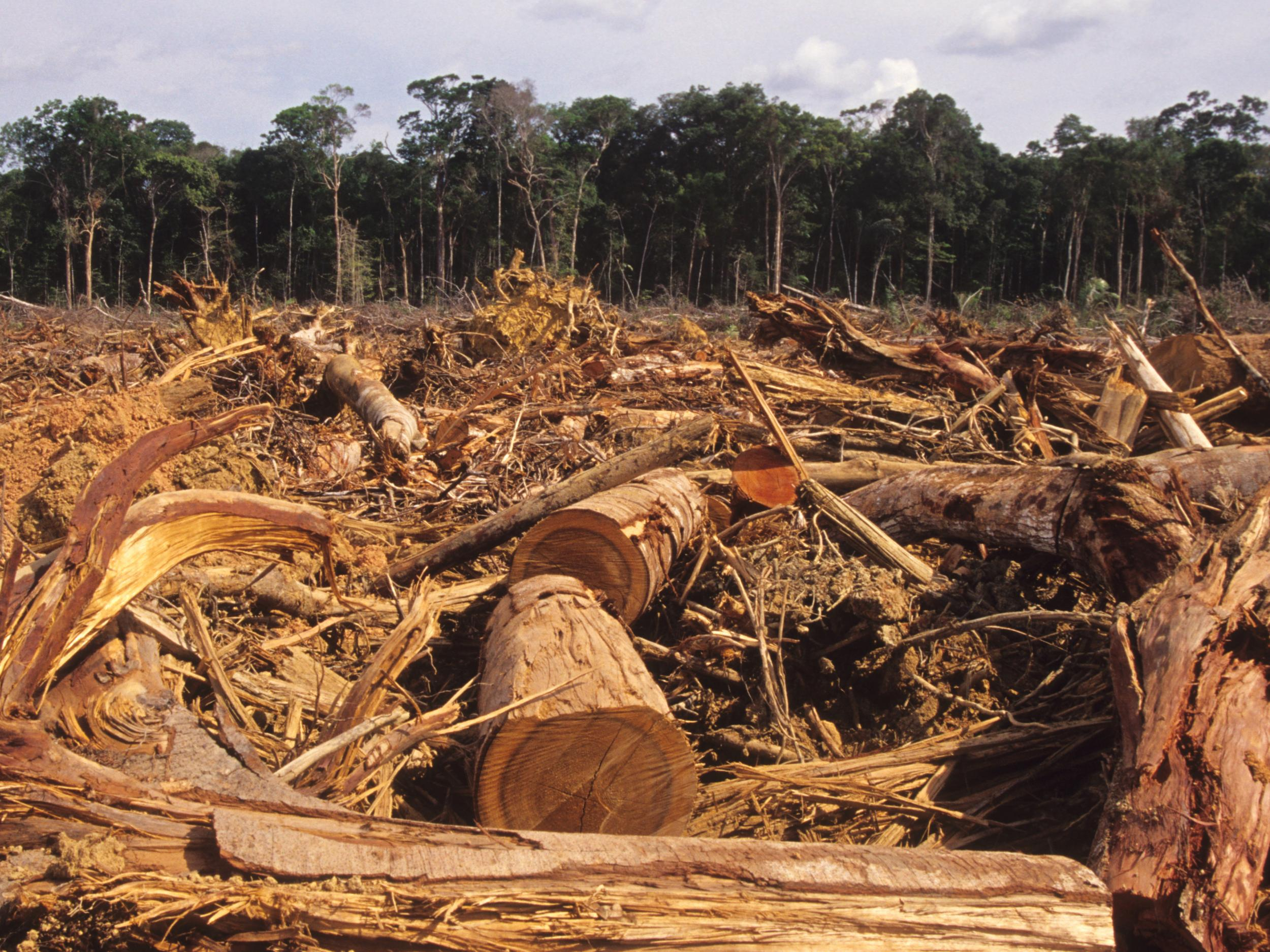 Deforestation - latest news, breaking stories and comment - The
