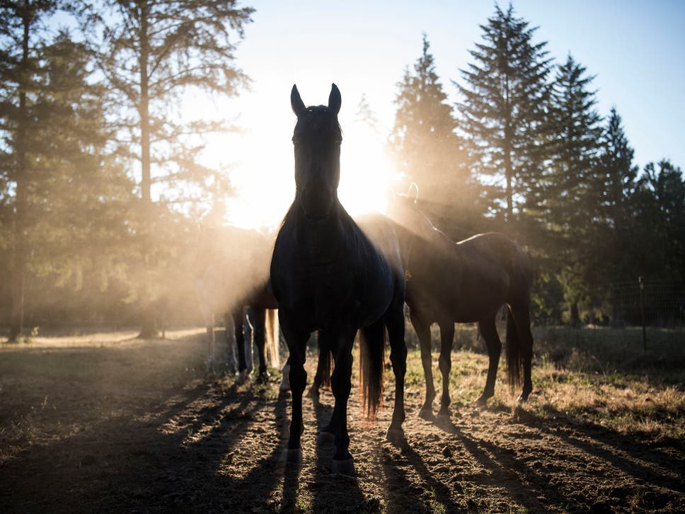 Justice's former owner, Gwendolyn Vercher, surrendered the horse to a rescue organisation in March 2017 at the urging of a neighbour