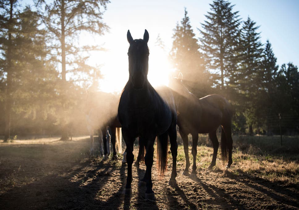 Horse sues owner for neglect | The Independent