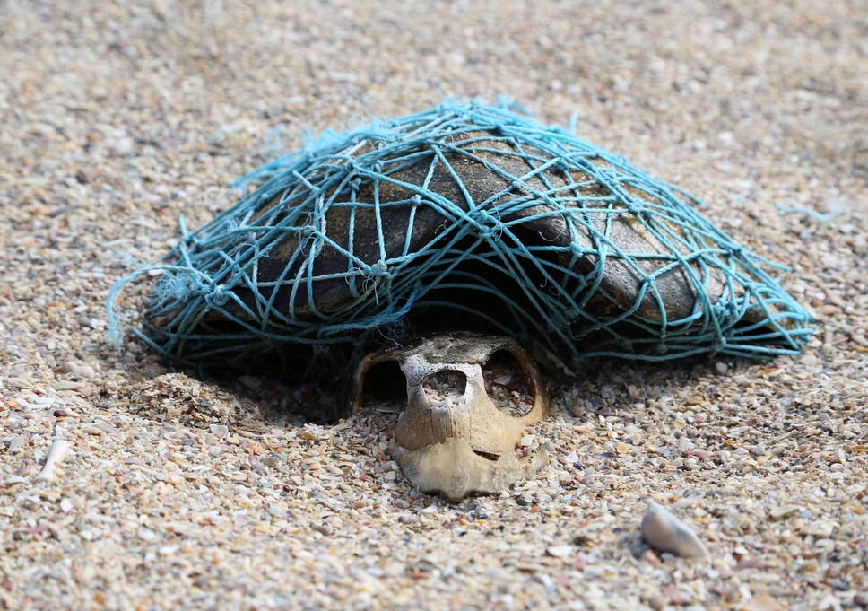 ghost netting image emerges of decomposed turtle wrapped in