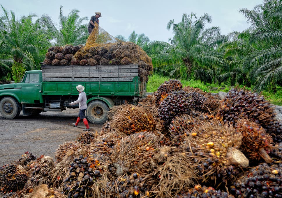 The reasons why palm oil is so controversial | The Independent