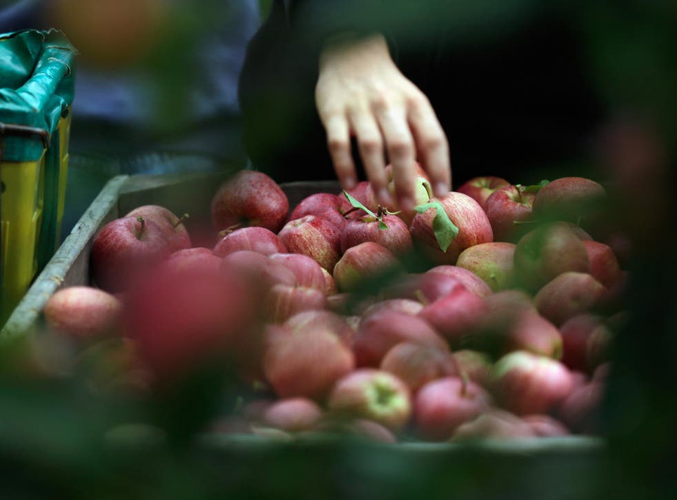 The Royal Horticultural Society said it was expecting its best ever apple crop this summer
