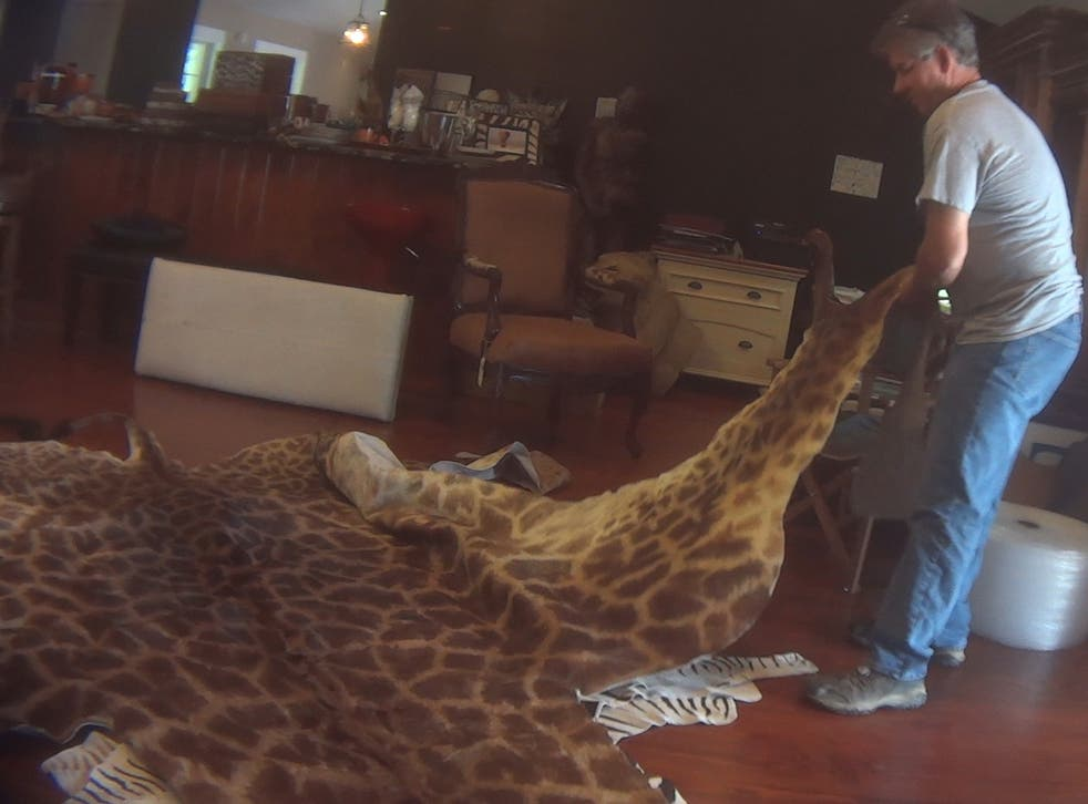 A full giraffe skin was among items found legally on sale