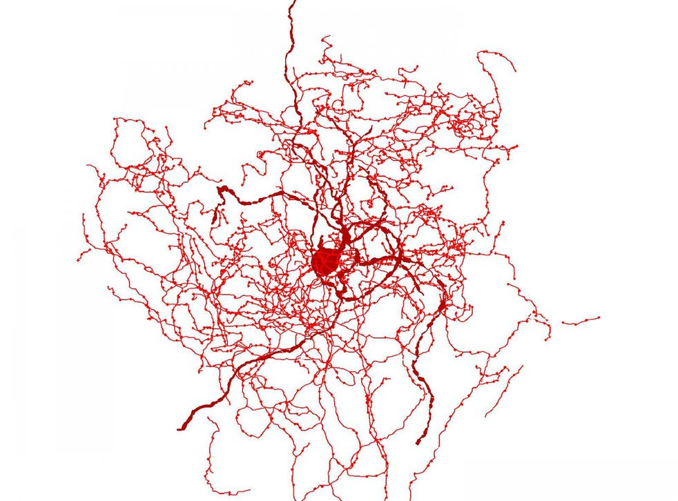 Digital reconstruction of a rosehip neuron in the human brain showing bundle of nerve fibres around central cell body