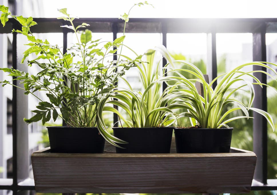 6 Best Balcony Planters The Independent