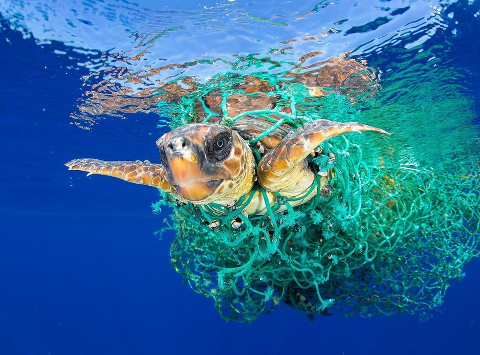 Bycatch mortalities include dolphins, marine turtles, juvenile fish, sharks and seabirds