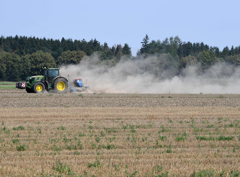 The extremely dry conditions in early summer took their toll on harvests