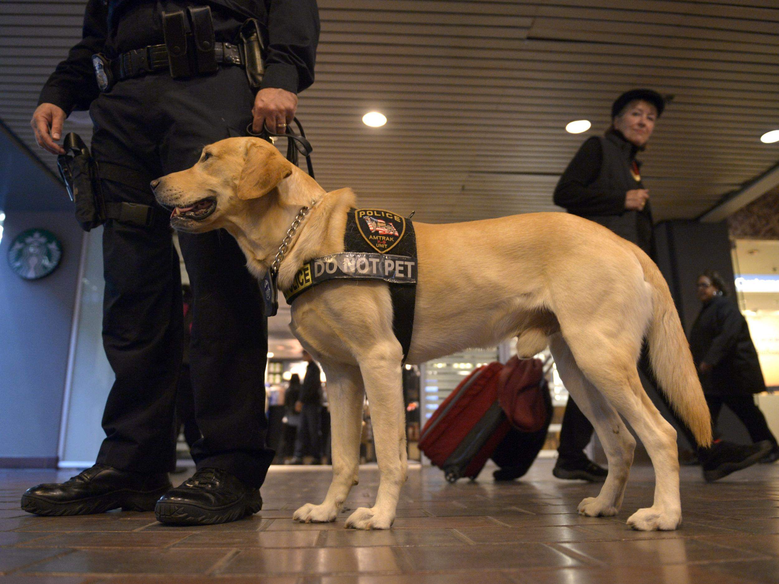 How to adopt service dogs that failed government training ...