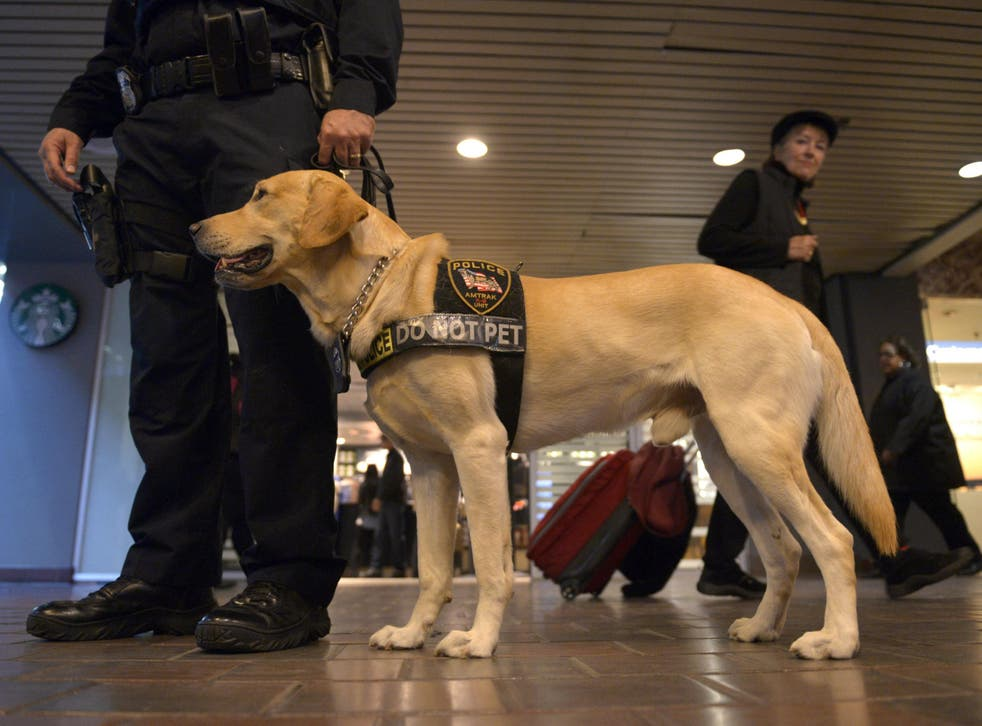 The USA's Transportation Security Administration has an adoption program for its drug-sniffing dogs that do not make it to graduation