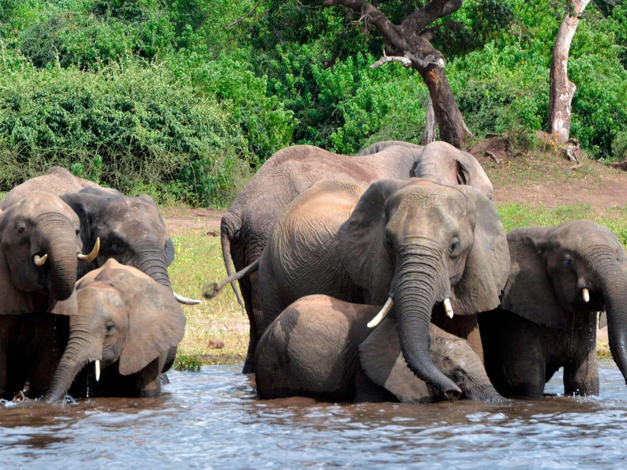 German tourist trampled to death by elephant in Zimbabwe as she tried to take photo