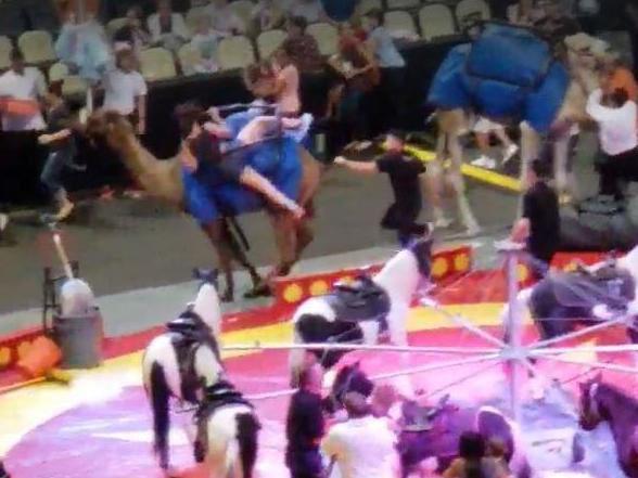 'Spooked' camel runs amok at Pittsburgh circus injuring seven people