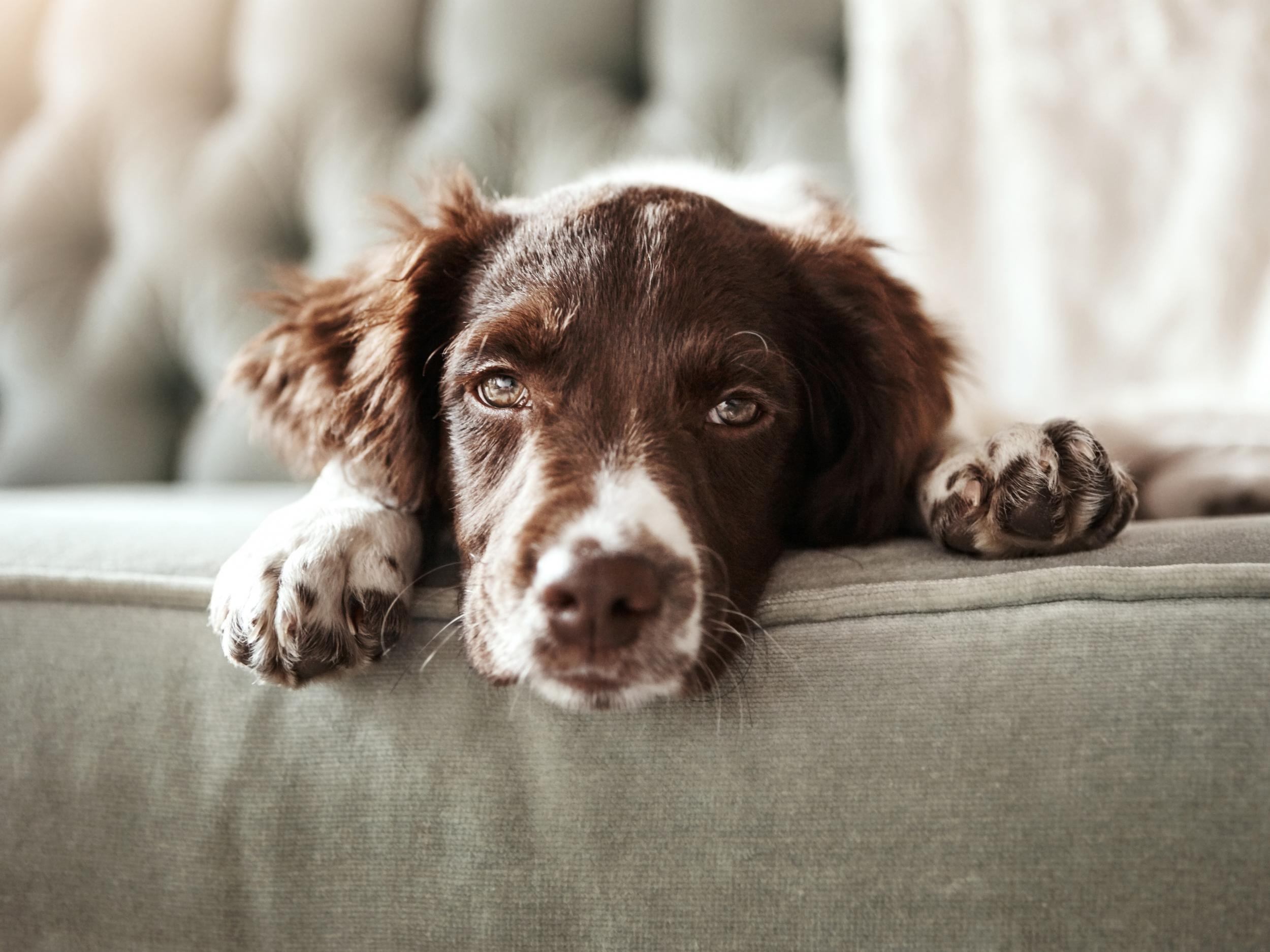 Pets across the UK are 'lonely, overweight and stressed', says new report