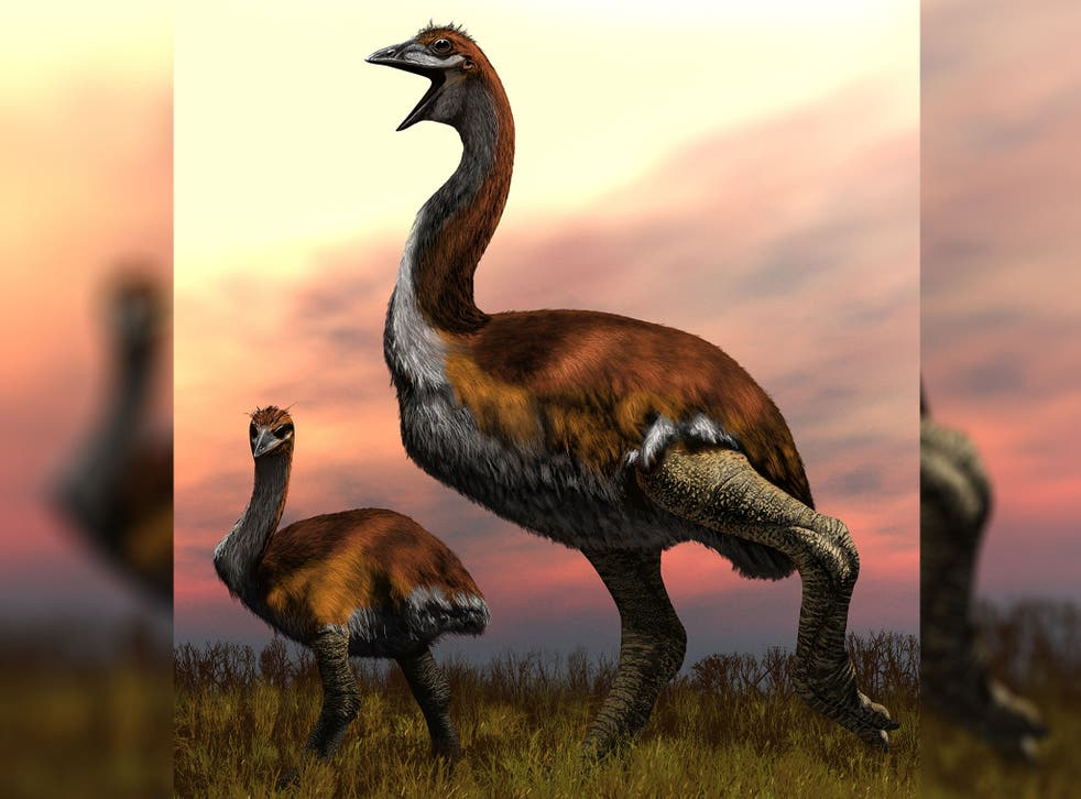 A mock-up of the newly-awarded largest bird, Vorombe titan