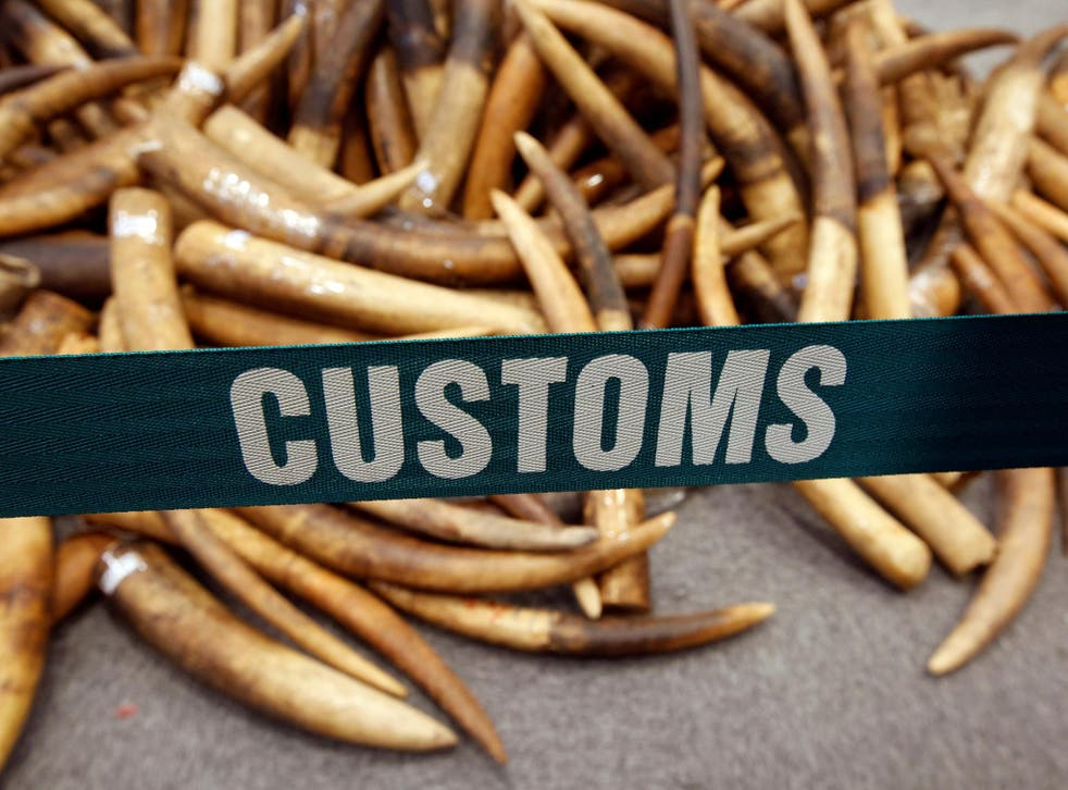 Ivory tusks seized by customs officials in Hong Kong