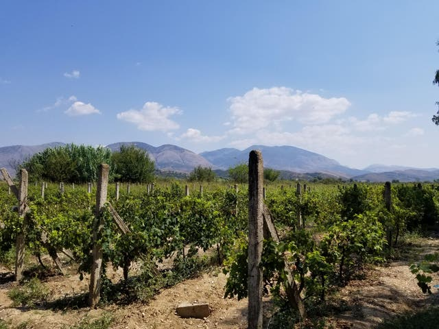 The Riviera might not be known for its wine – but the Kantina e Veres Isak vineyard is still ridiculously pretty