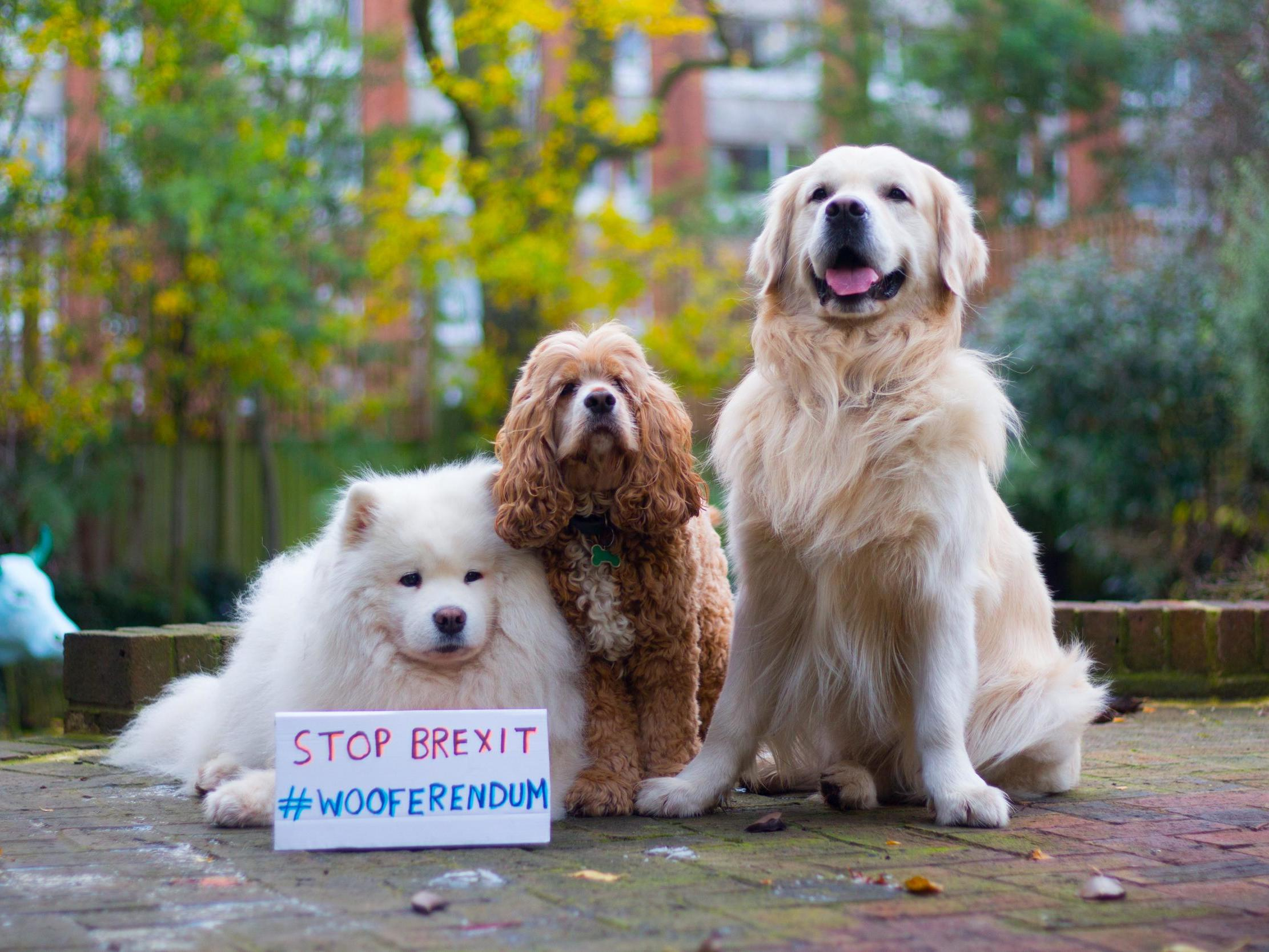 'Dogs against Brexit' to march on Parliament to demand new EU referendum