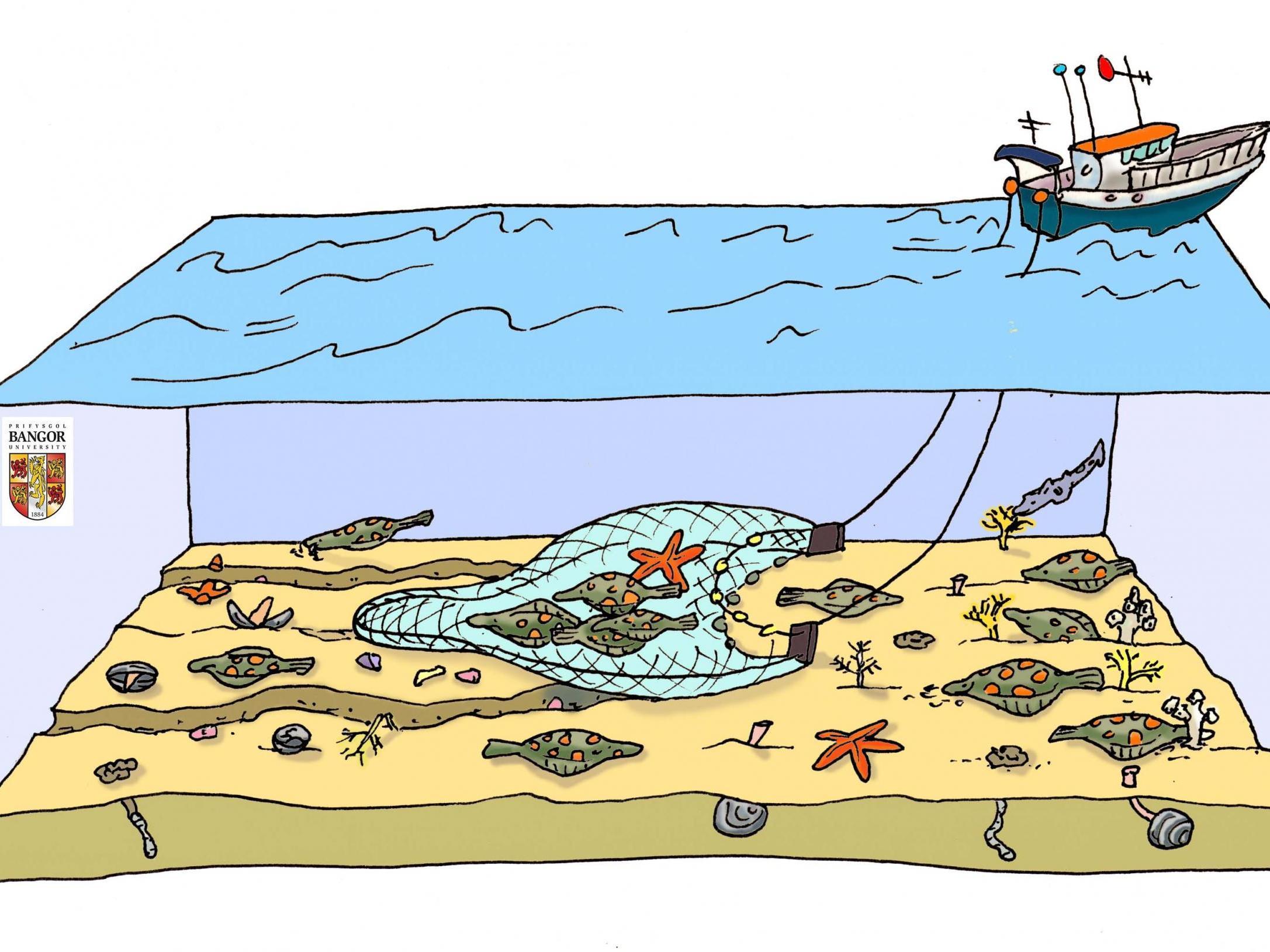 Quarter of world's seafood caught using destructive bottom-trawling