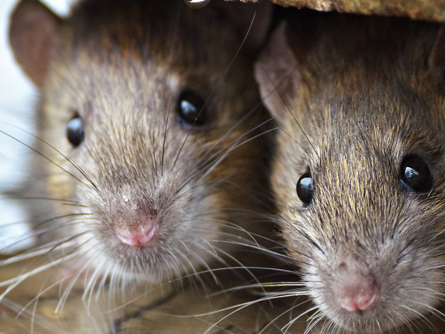 Fears rat hair, maggots and mould might start appearing in