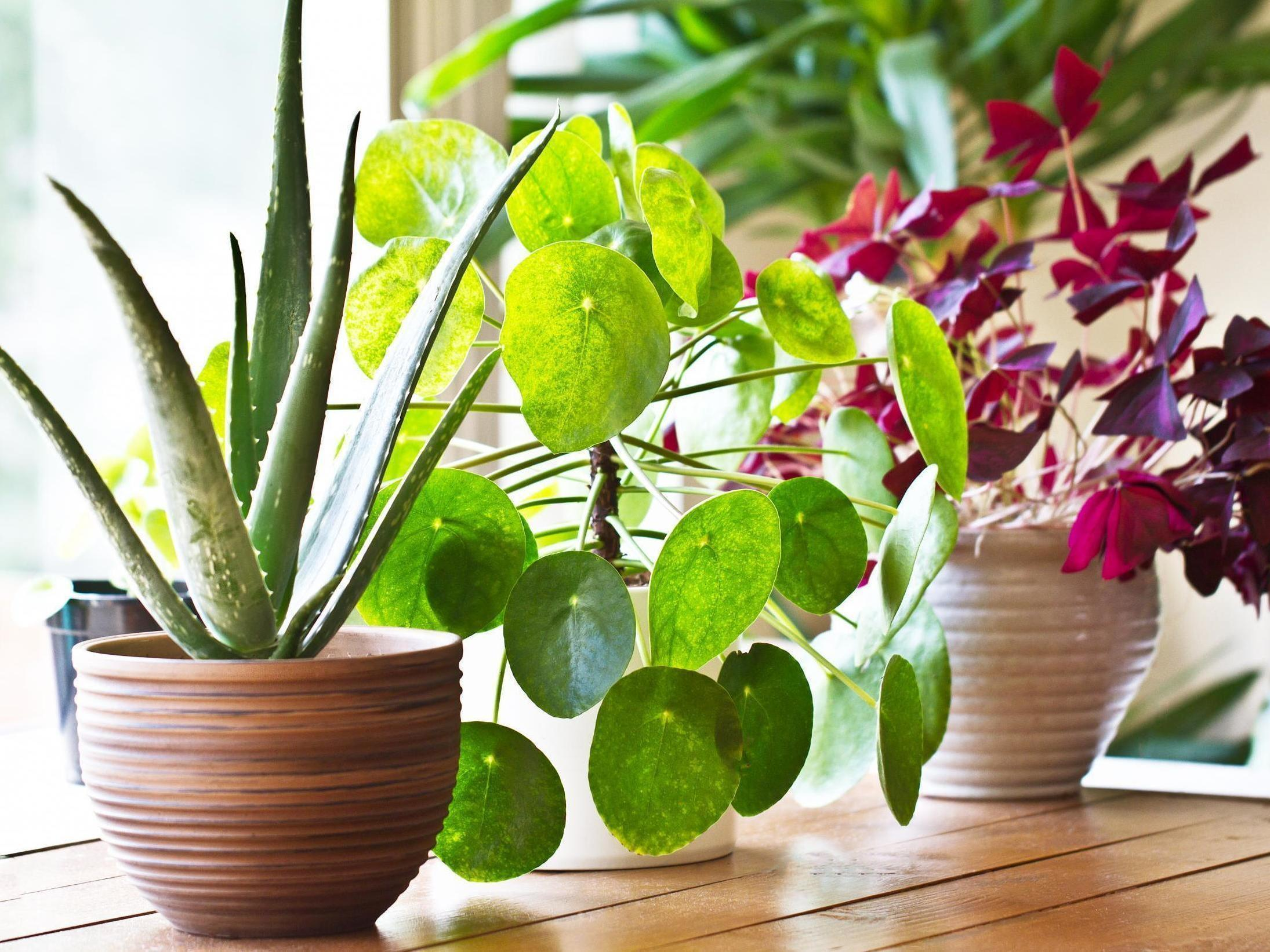 Houseplants Latest News Breaking Stories And Comment The