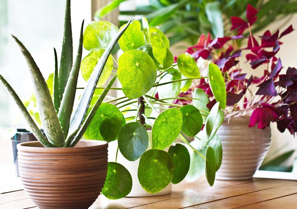 How to repot your houseplants: From warning signs to long