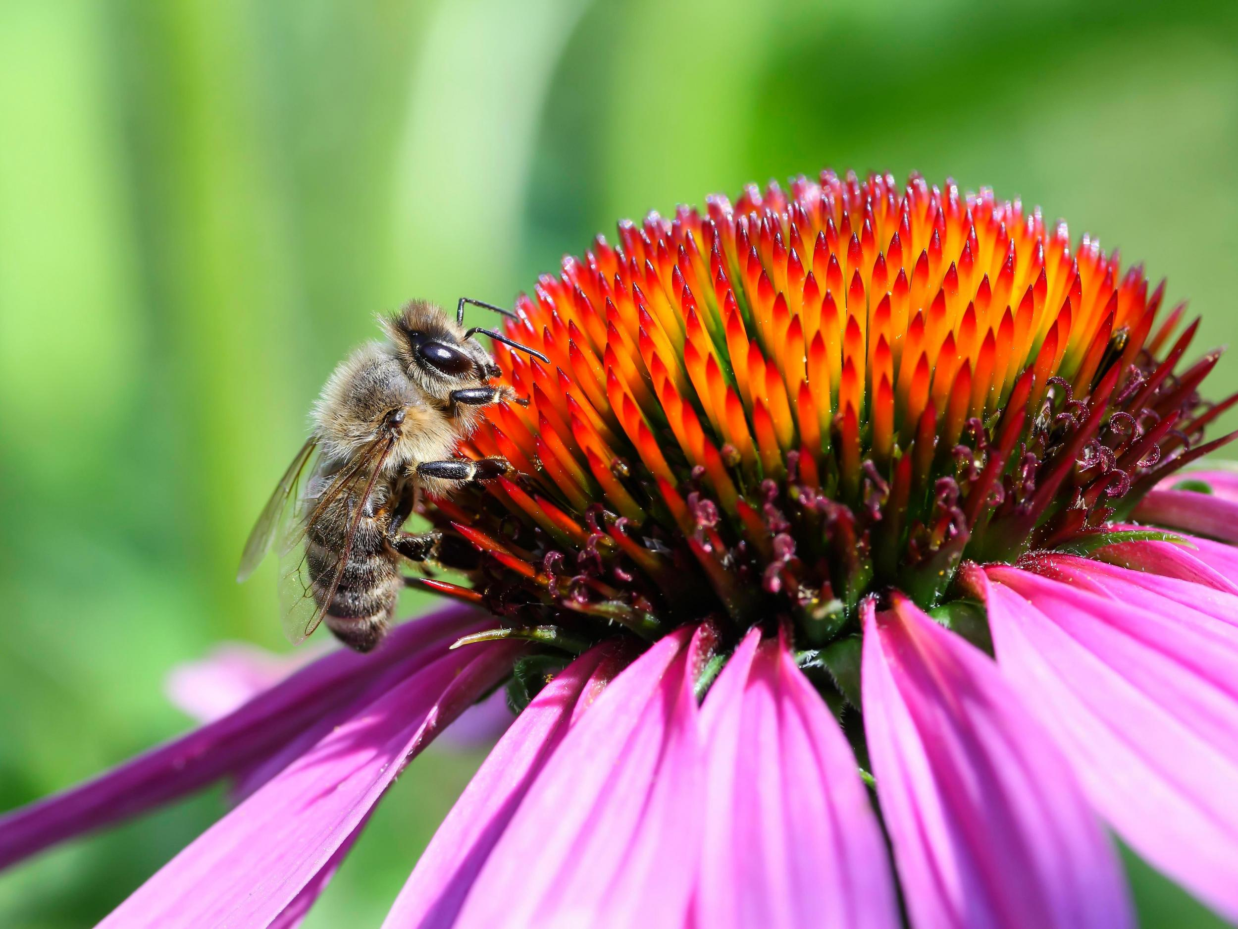 Hyper-alarming' study reveals dramatic decline of insect
