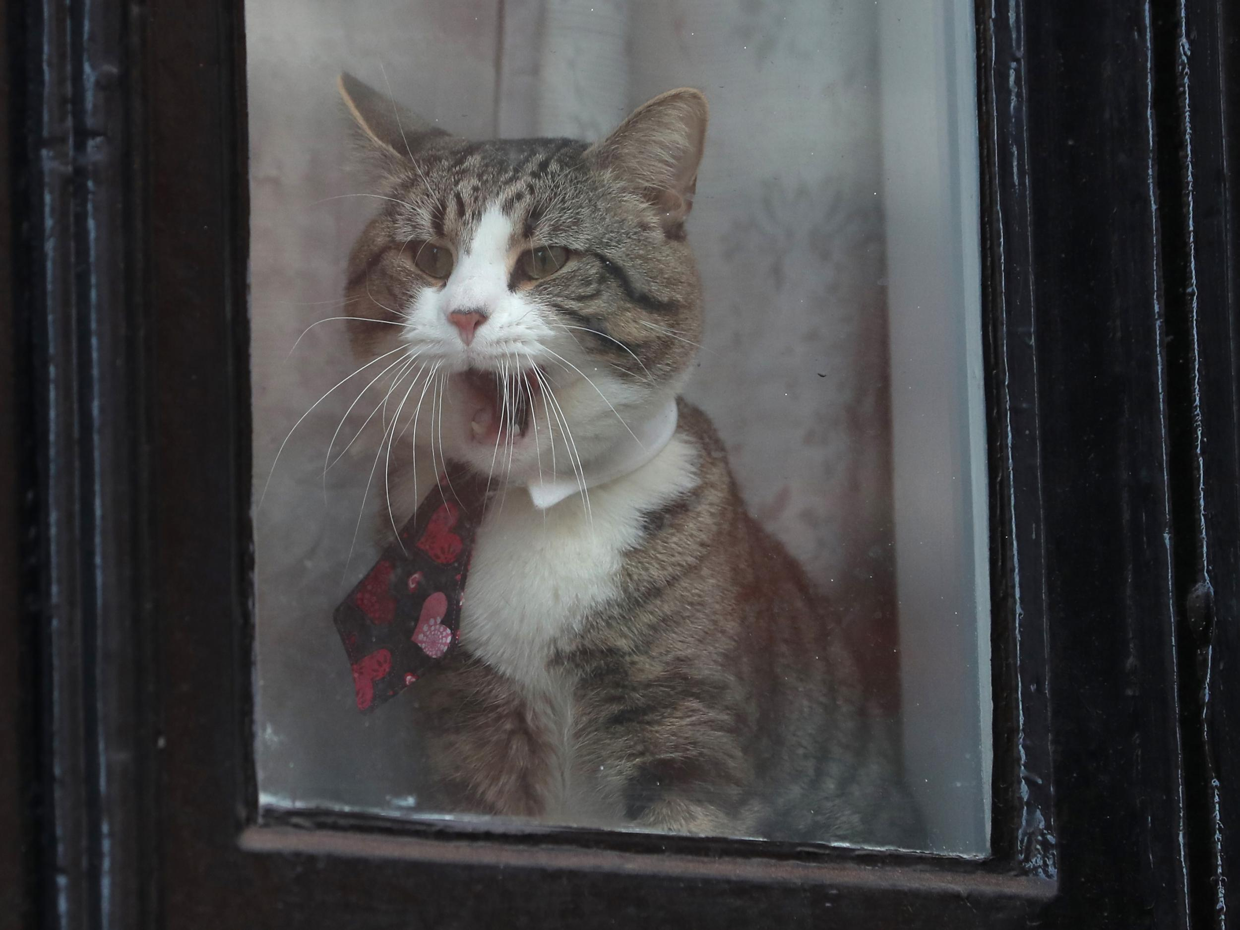The cat ultimatum