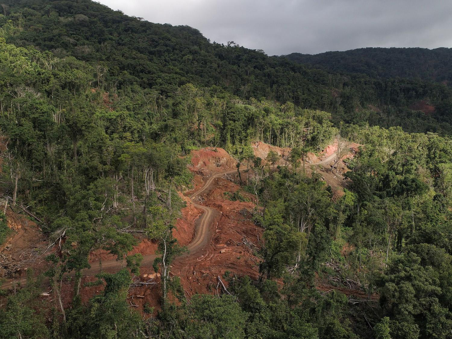 'Untouched' Pacific island forests could be destroyed within 20 years due to unsustainable logging