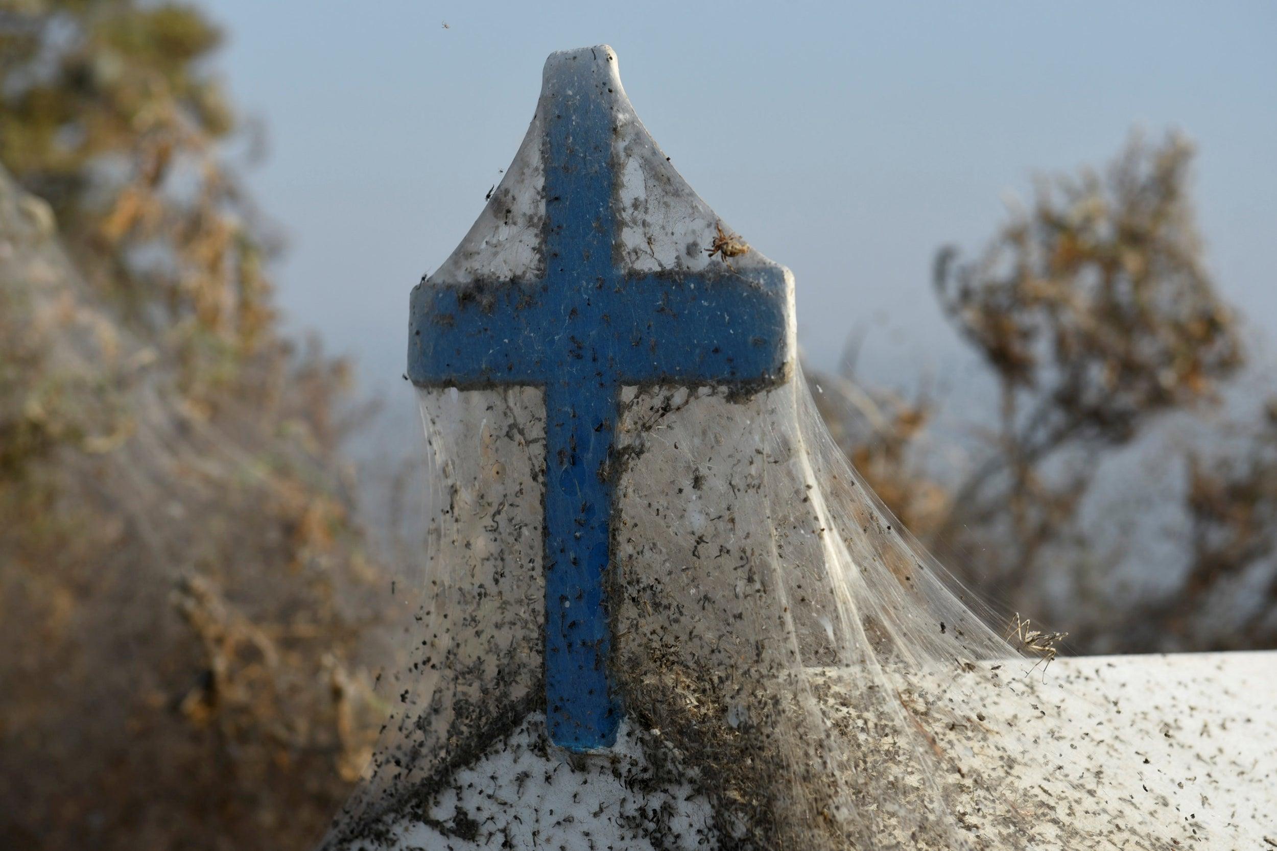 Giant 1,000m spider web covers Greek lake | The IndependentShapeleftrightShapeShape
