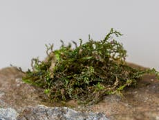 Primeval moss makes for a peaceful garden   The Independent