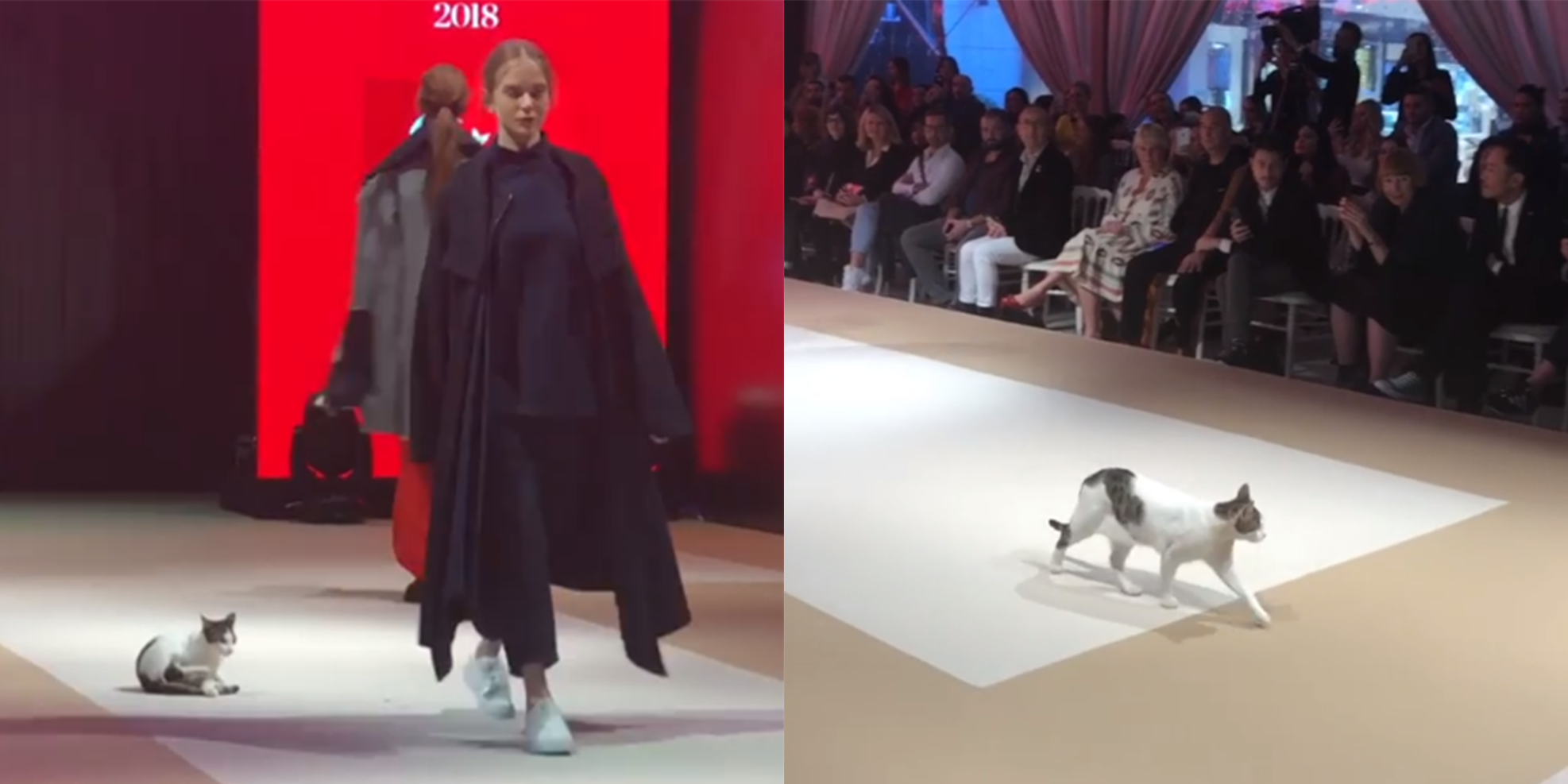 A cat just walked the catwalk in Turkey - and it's glorious