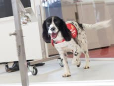 Sniffer dogs 'able to detect malaria in people by smelling socks'