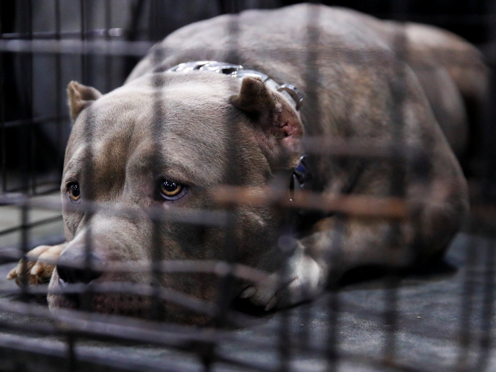 Watch VA says its resuming controversial medical experiments on dogs video