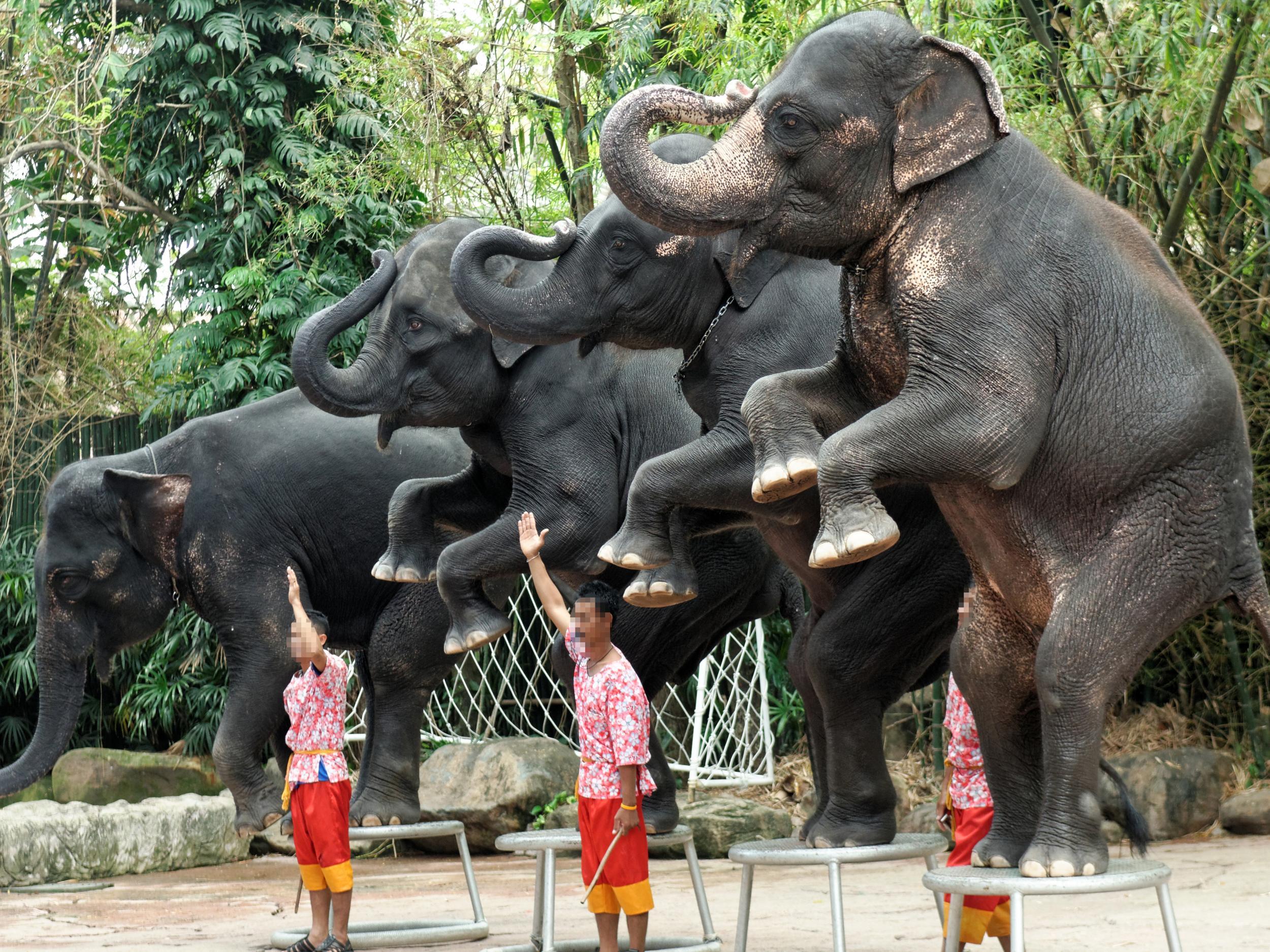 travel associations turning a blind eye to cruel wildlife