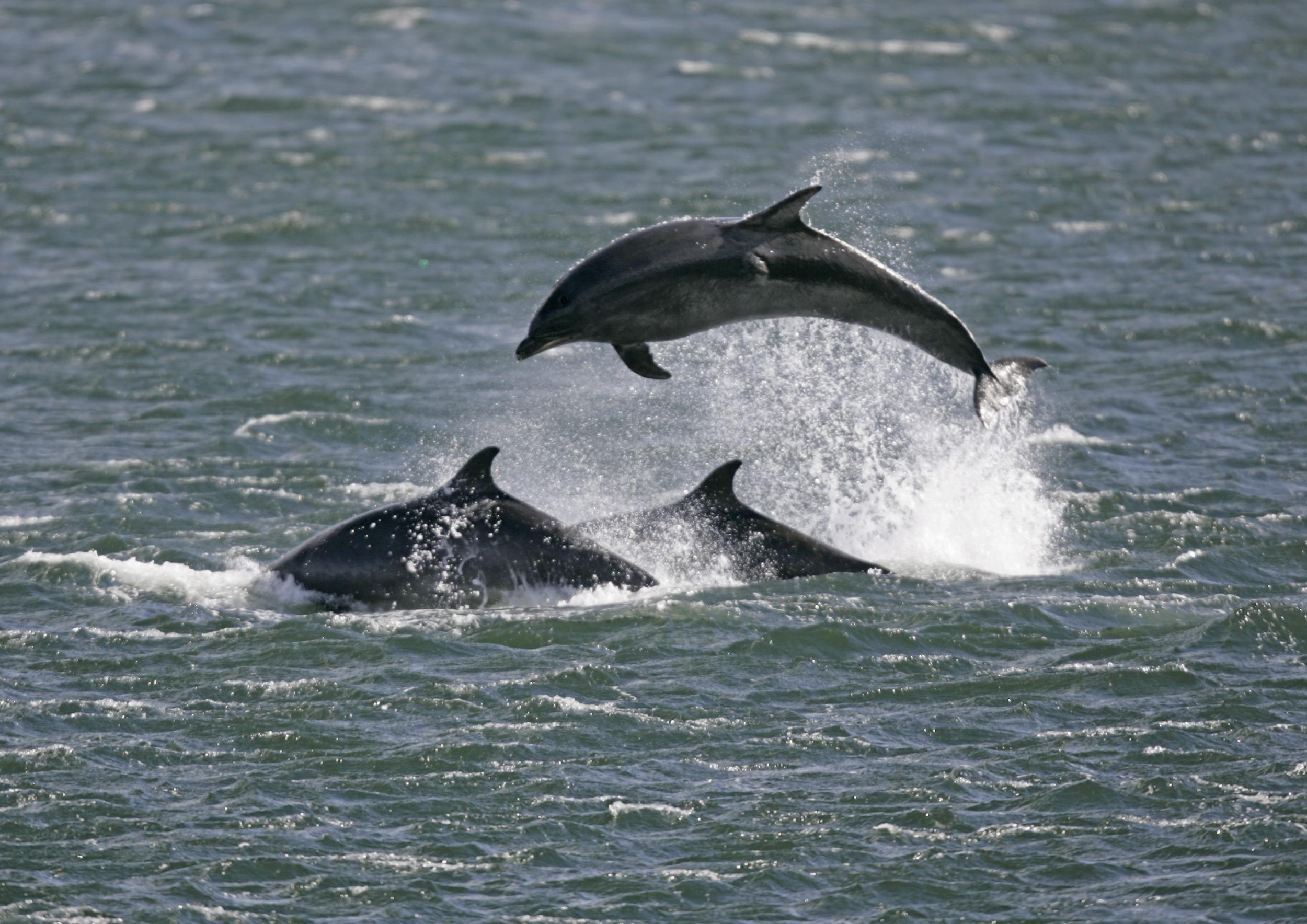 How to plan the ultimate dolphin spotting trip in the UK