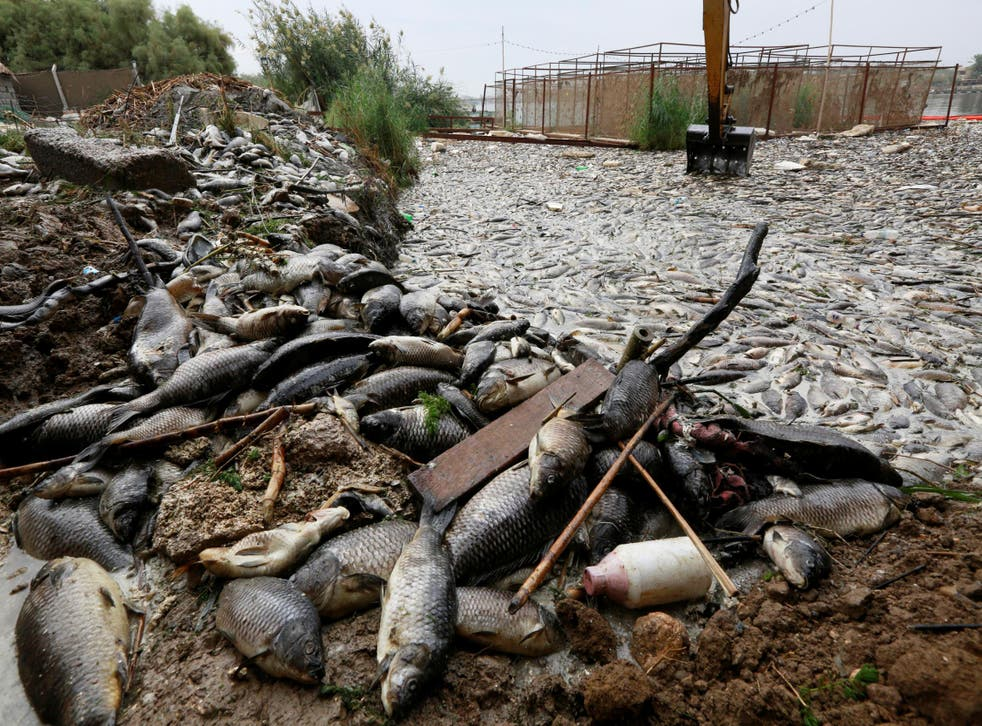An excavator removes floating dead fish from water near the fish farms at the Euphrates river in Mussayab district