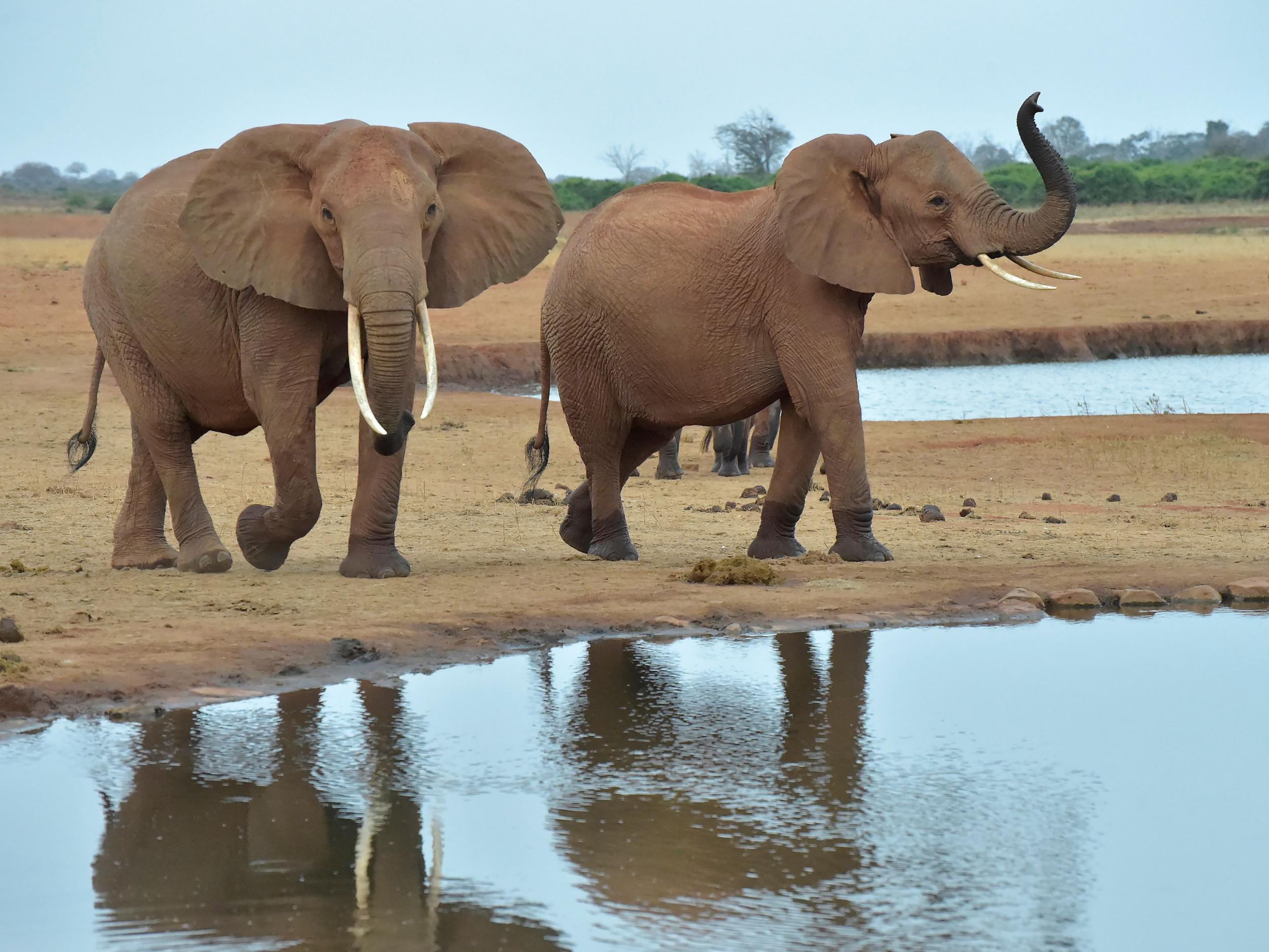 Ivory Trade - latest news, breaking stories and comment
